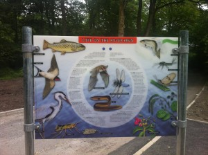 River interpretation board